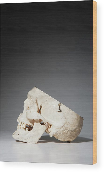 Sweden Wood Print featuring the photograph Anatomical Model Of Human Skull by Johner Images