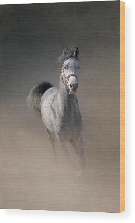 Horse Wood Print featuring the photograph Arabian Horse Running Through Dust by Christiana Stawski