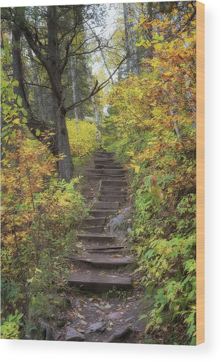 Autumn Wood Print featuring the photograph Autumn Ascension by Susan Rissi Tregoning