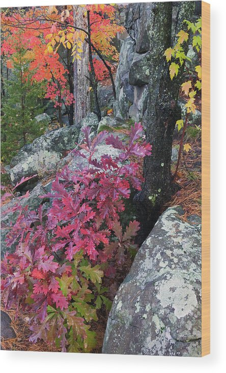 Photography Wood Print featuring the photograph Autumn Color Foliage And Boulders by Panoramic Images