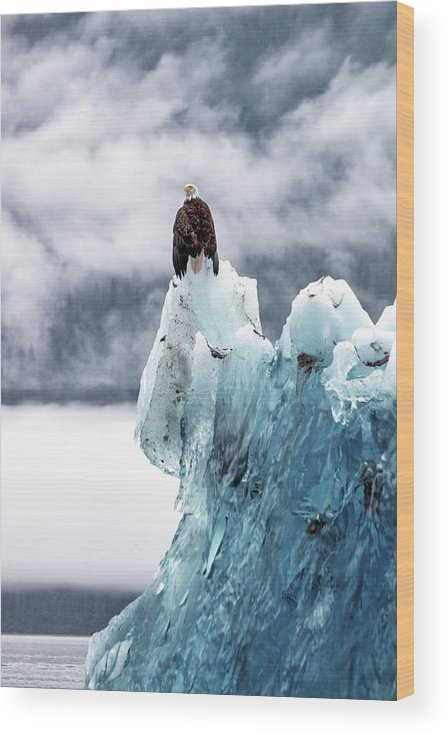 Iceberg Wood Print featuring the photograph Bald Eagle On The Glacier by Naphat Photography