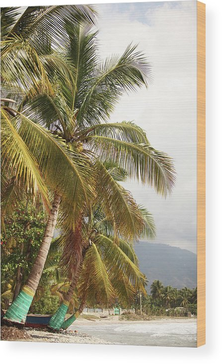 Tropical Tree Wood Print featuring the photograph Beach In Haiti by 1001nights