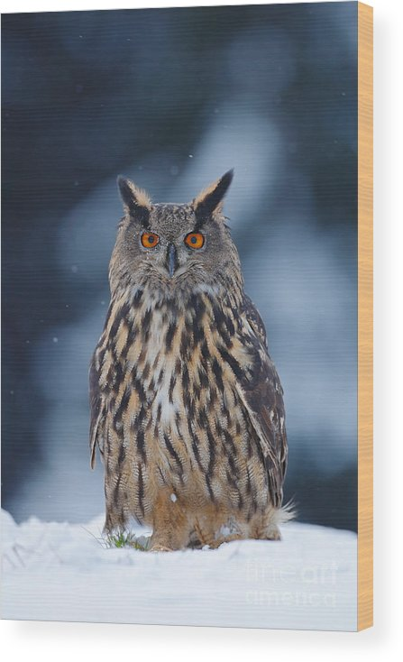 Big Wood Print featuring the photograph Big Eurasian Eagle Owl With Snowflakes by Ondrej Prosicky