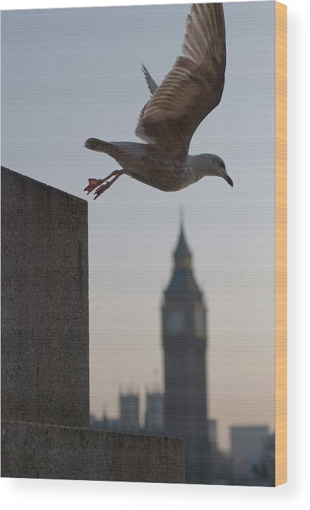 Clock Tower Wood Print featuring the photograph Bird Takeoff by Photograph © Jon Cartwright