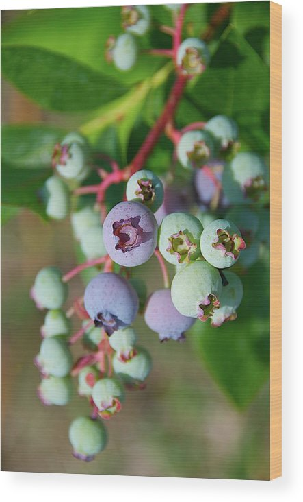 Large Group Of Objects Wood Print featuring the photograph Blueberries by ©howd, Howard Lau