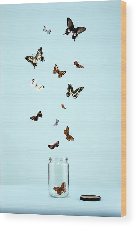 Animal Themes Wood Print featuring the photograph Butterflies Escaping From Jar by Martin Poole