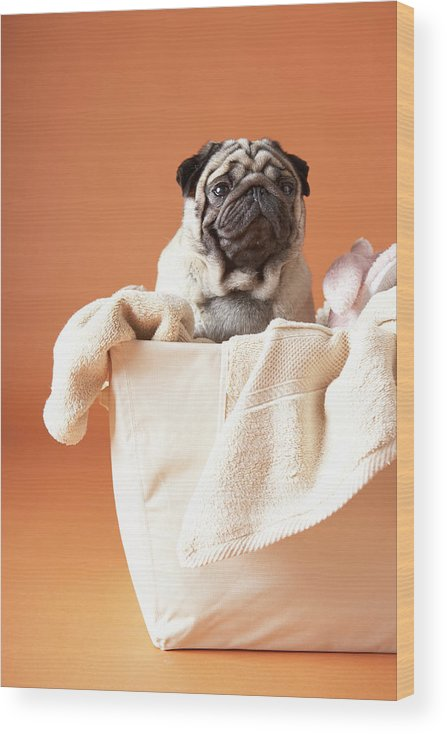 Pets Wood Print featuring the photograph Dog In Basket by Chris Amaral