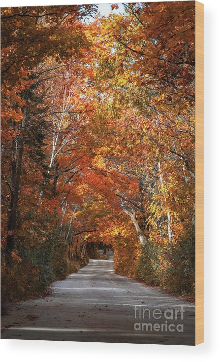 Door County Wood Print featuring the photograph Door County Golden Path by Ever-Curious Photography