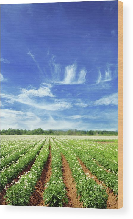 Scenics Wood Print featuring the photograph Field by Lisegagne
