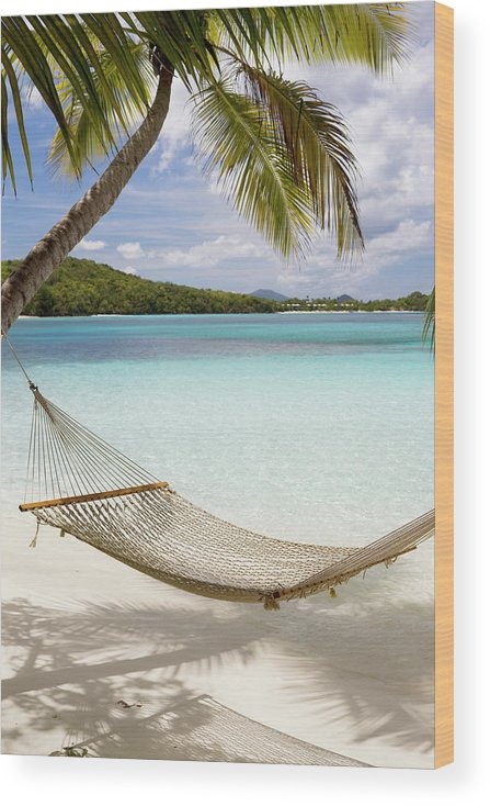 Water's Edge Wood Print featuring the photograph Hammock Hung On Palm Trees On A by Cdwheatley
