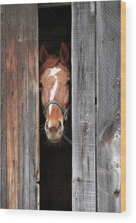 Horse Wood Print featuring the photograph Horse Peeking Out Of The Barn Door by 2ndlookgraphics