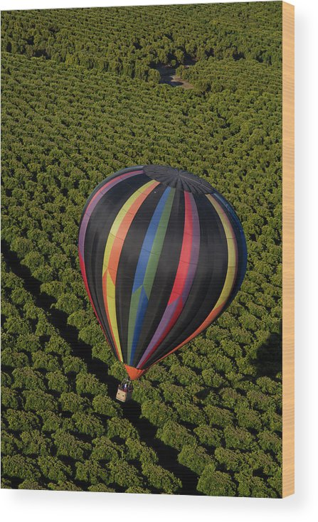 Tranquility Wood Print featuring the photograph Hot Air Balloon by Holly Harris