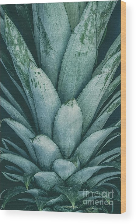 Crown Wood Print featuring the photograph Pineapple Crown by Torresigner
