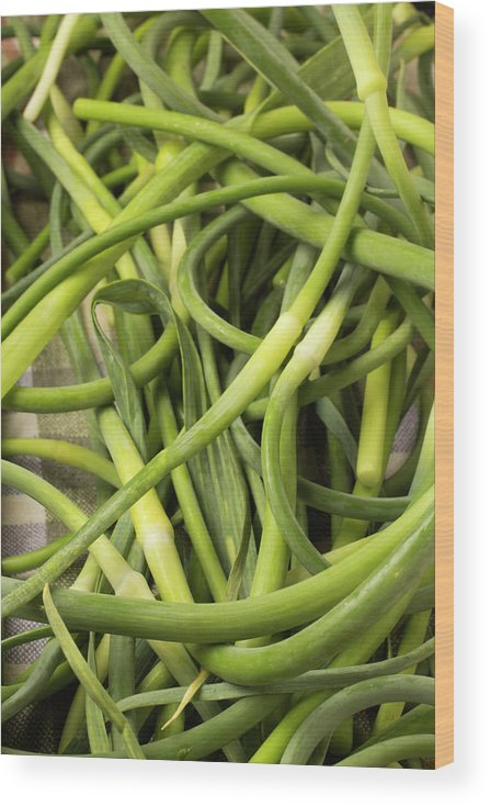 Season Wood Print featuring the photograph Raw Garlic Scapes by Brian Yarvin
