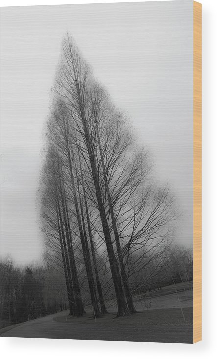 Tranquility Wood Print featuring the photograph Trees In Winter Without Leaves by Marie Hickman