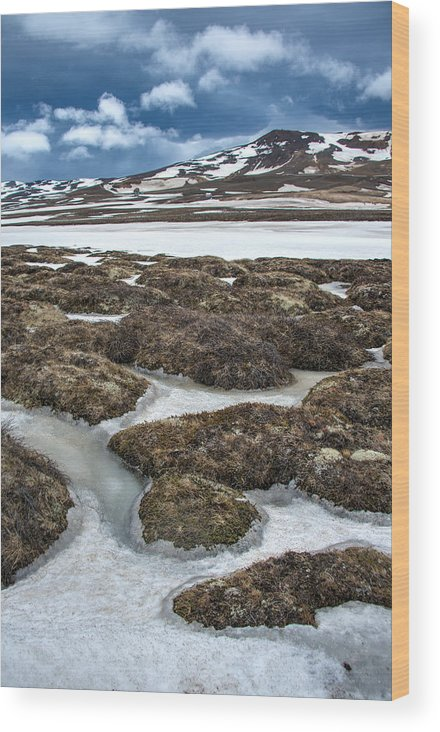 Scenics Wood Print featuring the photograph Artic Vegetation And Snow Pattern In The Foreground And Snowy Mountains In The Background by Fibru Photography