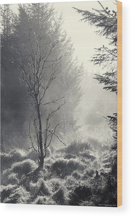 B/w Wood Print featuring the photograph Dawn Mist Clearing by Bear R Humphreys