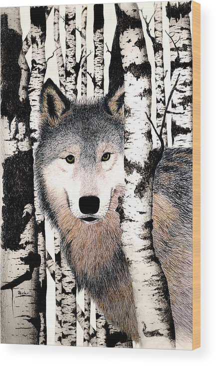 Wolf Wood Print featuring the drawing Peek-a-boo by Brent Ander