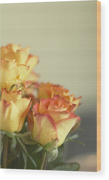 Petal Wood Print featuring the photograph Roses by Heidi Coppock-Beard