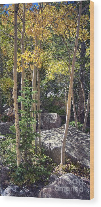 Rock Wood Print featuring the photograph Rock Garden 2 by Pete Hellmann