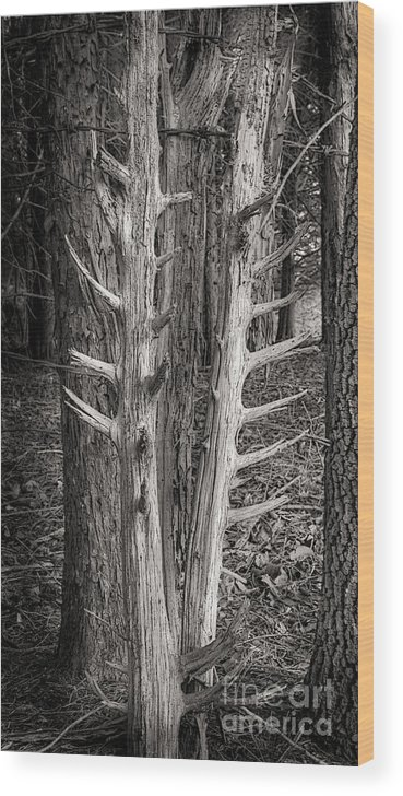 Scotopic Wood Print featuring the photograph Scotopic Vision 4 - Trees by Pete Hellmann