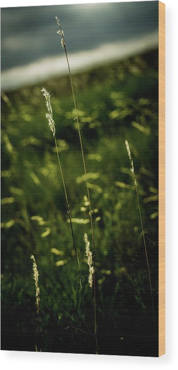 Smoke Wood Print featuring the photograph Grass by Peyton Vaughn