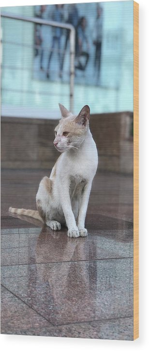 Wallpaper Wood Print featuring the photograph Cat Sitting On Marble Floor by Prashant Dalal