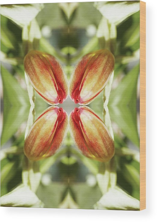 Tranquility Wood Print featuring the photograph Red Tulip by Silvia Otte