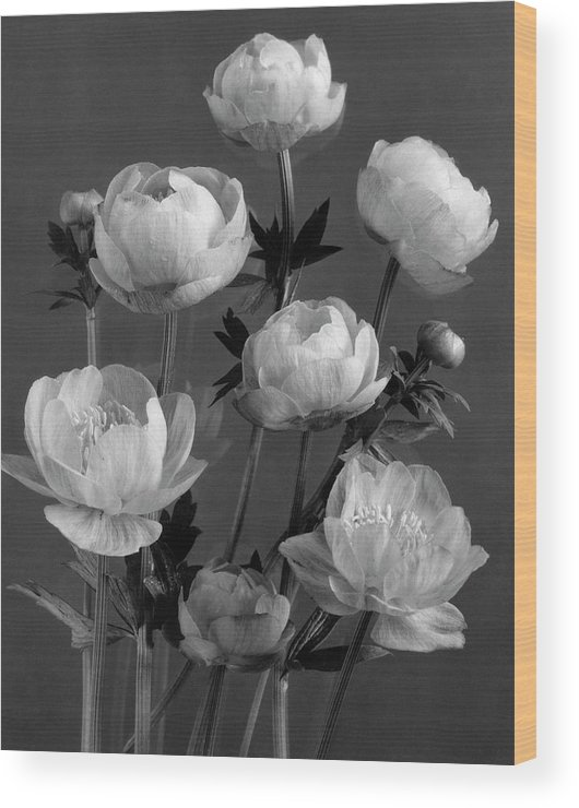 Flowers Wood Print featuring the photograph Still Life Of Flowers by J. Horace McFarland