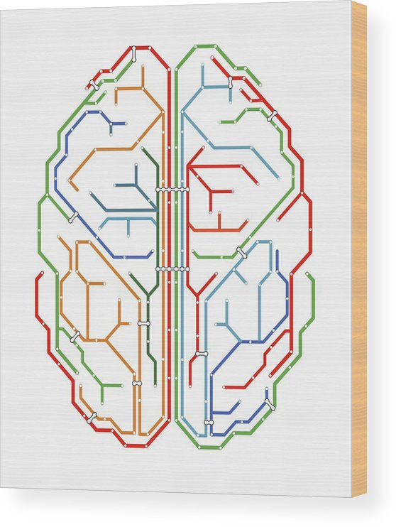 Abstract Wood Print featuring the photograph Brain by Alfred Pasieka