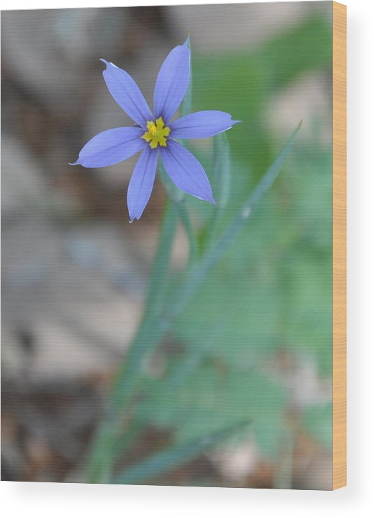 Blue Wood Print featuring the photograph Blue Flower by Frank Madia
