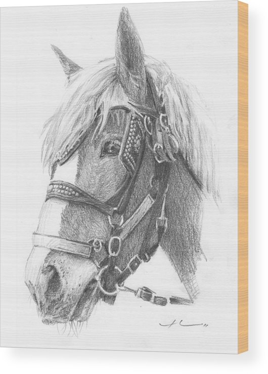 <a Href=http://miketheuer.com Target =_blank>www.miketheuer.com</a> Clydesdale Horse Pencil_portrait Wood Print featuring the drawing Clydesdale Horse Pencil_portrait by Mike Theuer