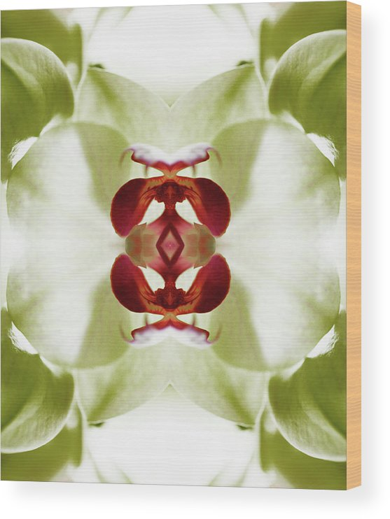 Tranquility Wood Print featuring the photograph Red Orchid by Silvia Otte