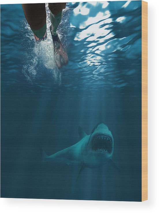 Underwater Wood Print featuring the photograph Shark attack by MediaProduction