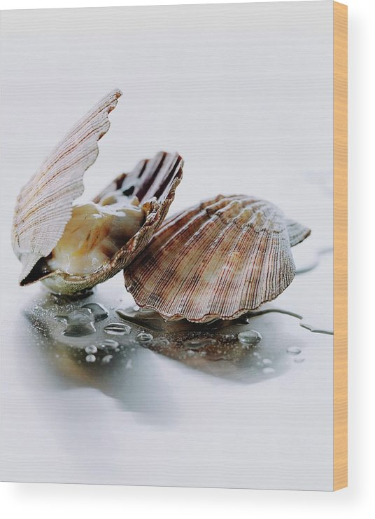 Cooking Wood Print featuring the photograph Two Scallops by Romulo Yanes