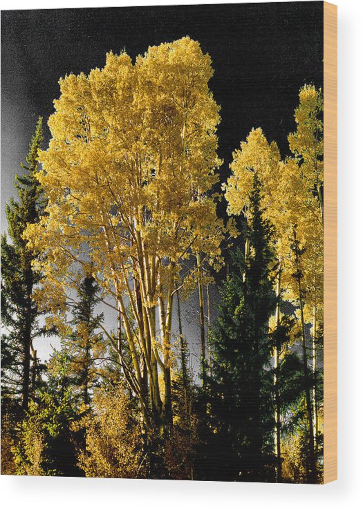 Aspens Wood Print featuring the photograph Aspens 2 by Jim Painter