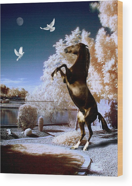 Birds Wood Print featuring the photograph Horsing Around by Jim Painter