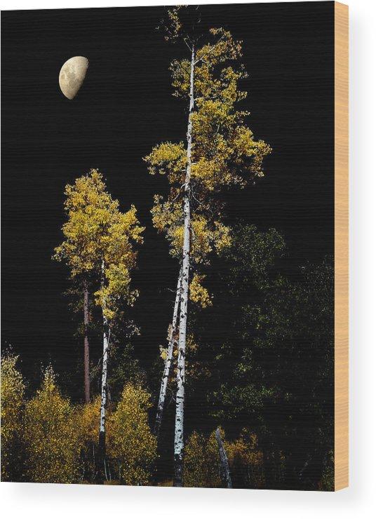 Aspens Wood Print featuring the photograph Mogollon by Jim Painter