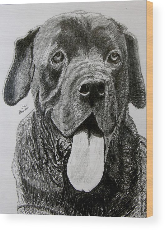 Dog Portrait Wood Print featuring the drawing Sampson by Stan Hamilton
