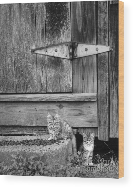 Cats Wood Print featuring the photograph Barn Cats by Pete Hellmann