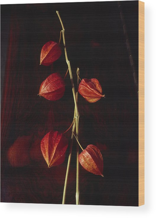 Floral Wood Print featuring the photograph Chinese Lanterns by Art Ferrier