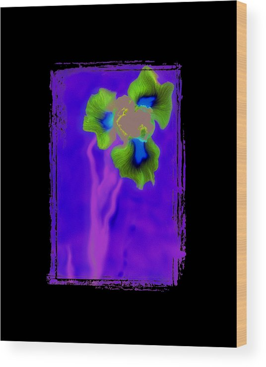 Iris Wood Print featuring the photograph Iris by K Randall Wilcox