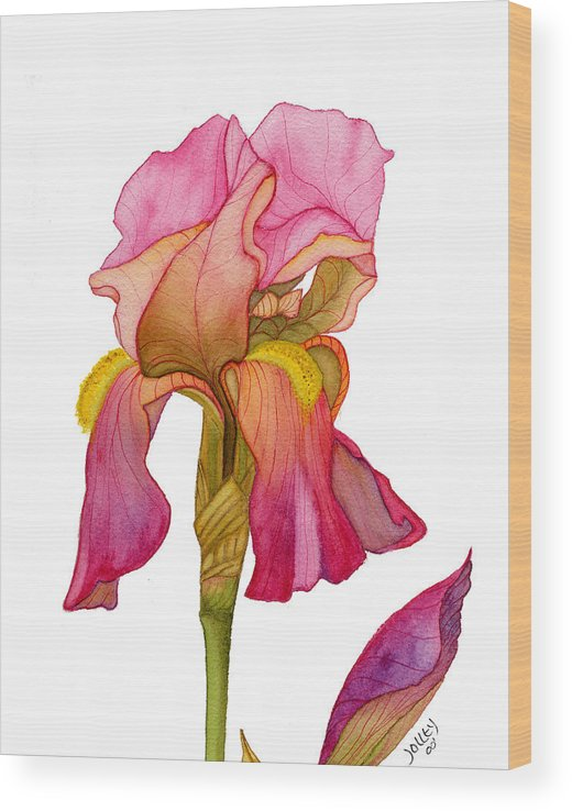 Bearded Iris Wood Print featuring the painting Jody's Iris by Stephanie Jolley