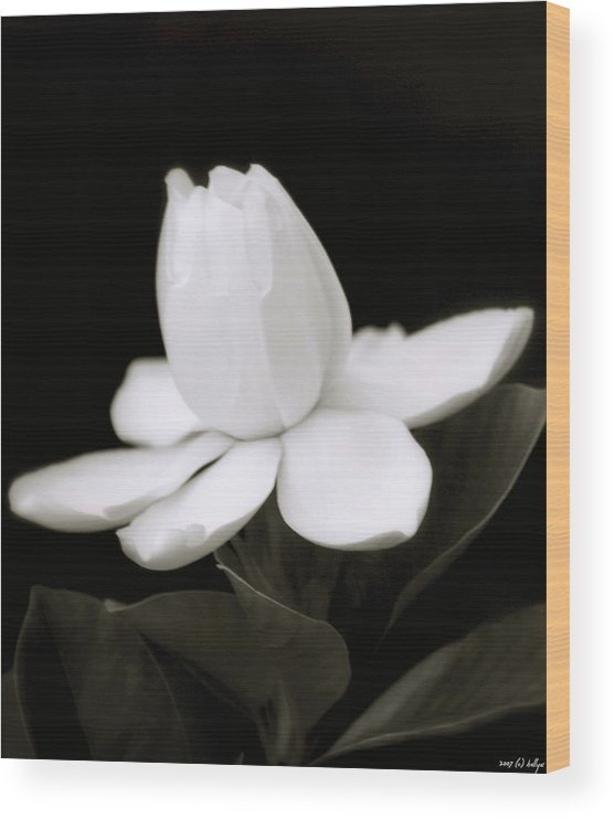 Flower Wood Print featuring the photograph Summer Fragrance by Holly Kempe