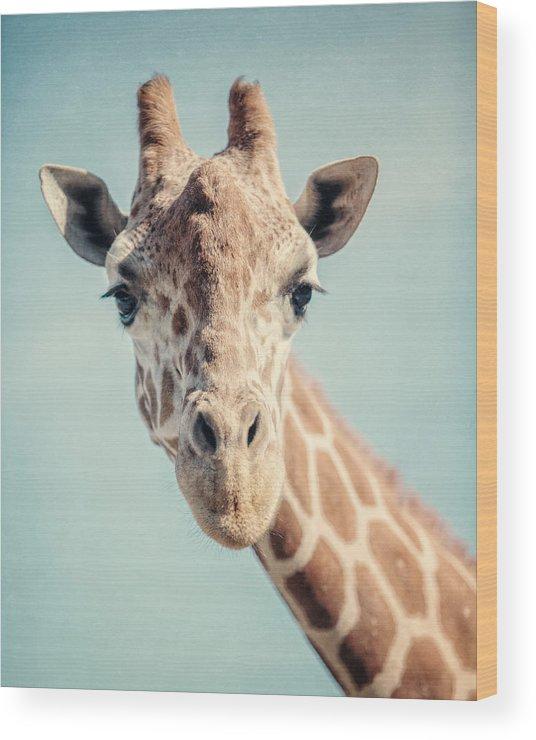Giraffe Wood Print featuring the photograph The Baby Giraffe by Lisa R