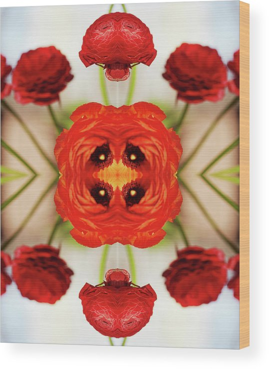 Tranquility Wood Print featuring the photograph Ranunculus Flower by Silvia Otte