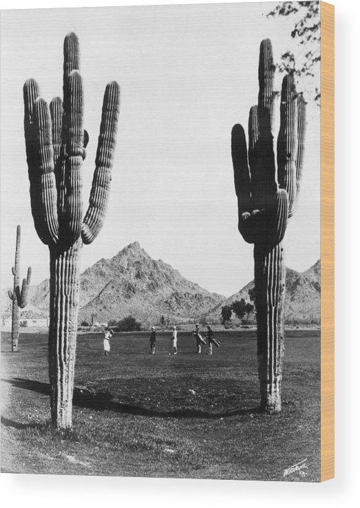Recreational Pursuit Wood Print featuring the photograph Golf In The Desert by General Photographic Agency