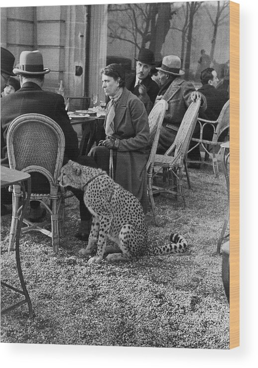 Pets Wood Print featuring the photograph Pet Cheetah by Alfred Eisenstaedt