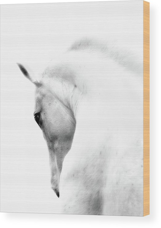 Horse Wood Print featuring the photograph White Stallion Andalusian Horse Neck by 66north
