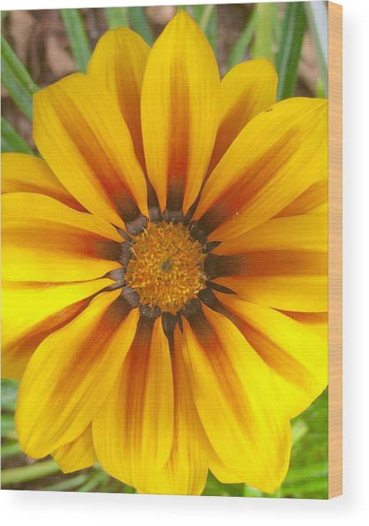 Color Image Wood Print featuring the photograph Divine Nature by Heidi Coppock-Beard